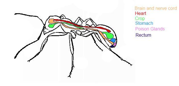 你还在相信蚂蚁辛苦养家是为集体无私奉献?真相比你想象更残酷